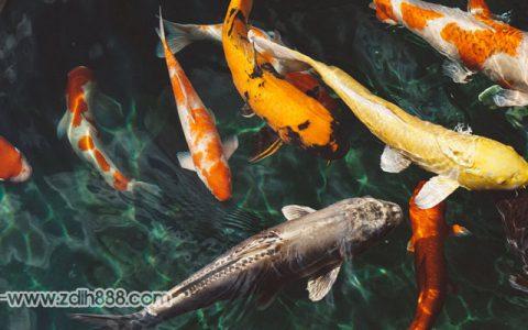 鱼塘理论是什么?怎么使用鱼塘理论搭建优质鱼塘?