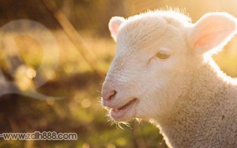 最新薅羊毛项目:恒大恒房通签到7天领100元,邀请1人奖励10元